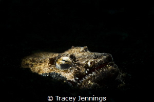 A snake eel - Lembeh by Tracey Jennings