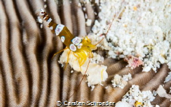 Small Dragon Shoot is done with an Nikon D200 in an Sea&S... by Carsten Schroeder