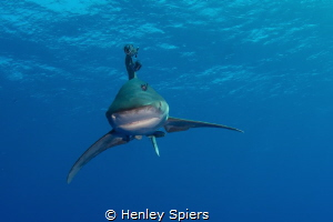 Aren't you afraid of sharks? by Henley Spiers