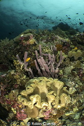 Tube Sponge & Leather Coral by Robby Quento