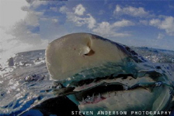 Rough seas mean it's time for Lemon Snaps! Never is there... by Steven Anderson