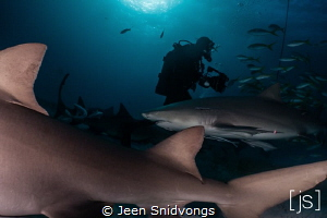Shark Diver at Tiger Beach by Jeen Snidvongs