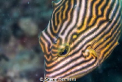 Whorls and Ridges