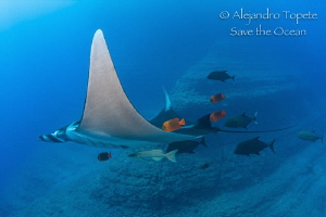 Mantaray with friends, Boiler San benedicto México by Alejandro Topete