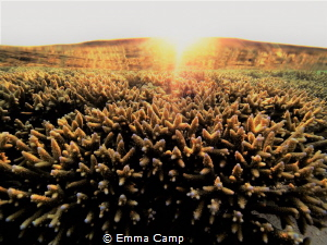 This shot was taken right as the sun set over the reef on... by Emma Camp