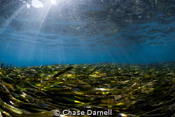 """Grass Lands""