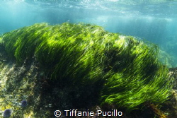 Although I had already graduated, I joined the underwater... by Tiffanie Pucillo