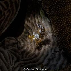 Harlekin  Beauty Shot by Nikon D200 by Carsten Schroeder