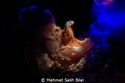 Combined lightening with snooted strobe and UV  light on ... by Mehmet Salih Bilal