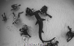 Overhead Shot of a Great Hammerhead photo shoot in Bimini by Rickey Ferand