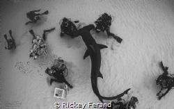 Overhead Shot of a Great Hammerhead photo shoot in Bimini by Rickey Ferand