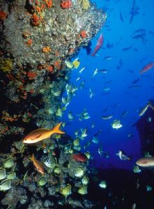 Sea of Cortez Reef; Nikon F4, 18mm, Aquatica, Ikelite str... by Andrew Dawson