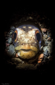 Snake Eel waits for prey: Retra Snoot lighting. by Tony Cherbas