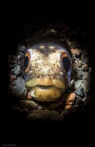 Snake Eel waits for prey: Retra Snoot lighting. by Tony Cherbas