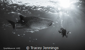 Adrian and the whaleshark by Tracey Jennings