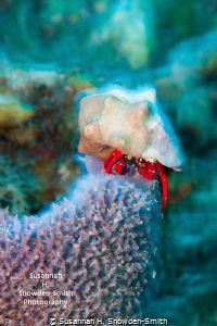 """""""Hermit Crab In Slow Motion""""  Ambient light and a slow ... by Susannah H. Snowden-Smith"""