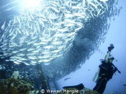 Schooling fish under the Arborek Jetty by Wawan Mangile