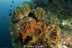 Colorful Reef by Robby Quento