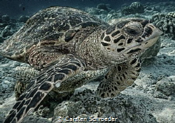Turtle HDR Nikon AW130 by Carsten Schroeder
