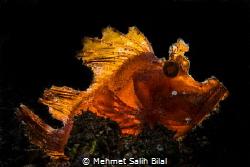 Rhinopia was backlighted with Kraken 2500. by Mehmet Salih Bilal
