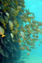 Today's dive. Rough surf...vis pretty good anyway. You ju... by Glenn Poulain