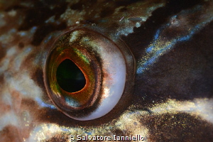 eye by Salvatore Ianniello