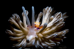 Synchronize Location :Lembeh Indonesias Canon 5dsr Can... by Yung Sen Wu