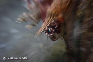 Twinkle in my eye by Tracey Jennings