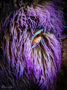 Bad Hair day.. heavy current in the shallows by Steven Miller