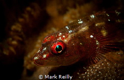 mother fish and her eggs by Mark Reilly