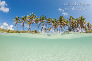 Palms and Sea, Isla Contoy Mexico by Alejandro Topete