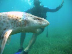 shark attack by Hakan Taslicay