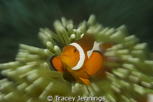 Nemo - no photoshop by Tracey Jennings