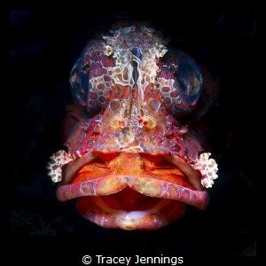 duck face by Tracey Jennings