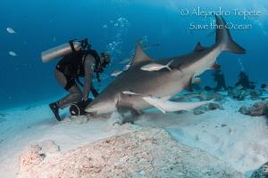 Shark and Feeder, Playa del carmen México by Alejandro Topete