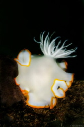 Tittle: i hide my ear!