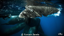 a sperwhale tail very close during a socialization time by Romain Barats