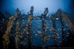 G H O S T - W R E C K  Ghost Wreck / Fish Ball Lang Ten... by Irwin Ang
