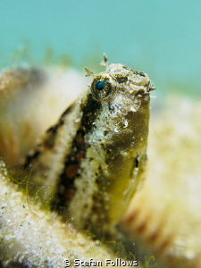 Shine!