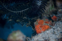 V I S I B L E
