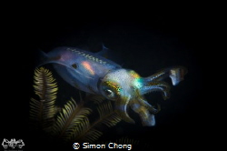 Squid In The Night