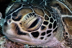 Turtle taken with an Nikon AW130 by Carsten Schroeder