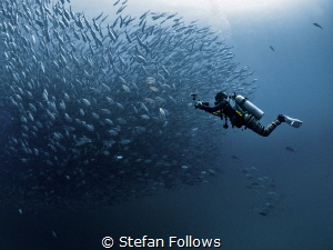 Lights, Camera, Action ... !