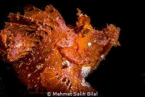 Rhinopia with Snoot. by Mehmet Salih Bilal
