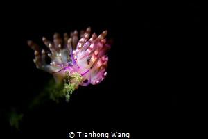 BLOOM The flower ramble underwater by Tianhong Wang