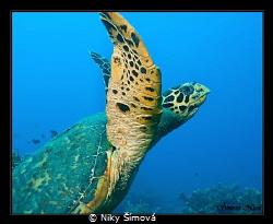Flying turtle by Niky Šímová