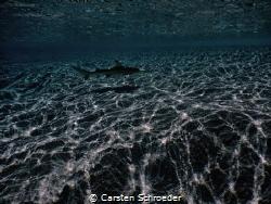 Black Tip at Beach taken with Nikon AW130 by Carsten Schroeder