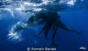 a diver enters in the confidence...will they accept her? by Romain Barats
