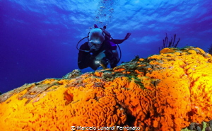 Diver and orange sponge by Marcelo Lunardi Ferronato