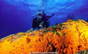 Diver and orange sponge by Marcelo Lunardi Ferronato